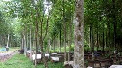 Bình Định: Đầu tư trên 38 tỷ đồng trồng và bảo vệ rừng