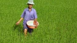 Tập trung chăm sóc cho lúa mới gieo cấy