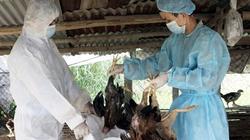 Cơ bản kiểm soát được dịch cúm gia cầm