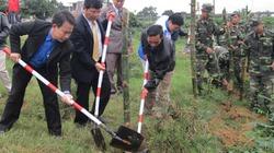 Quảng Nam: Trồng tre chống sạt lở dọc sông Vu Gia