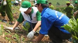 Tuyên Quang: Hỗ trợ trồng mới rừng phòng hộ