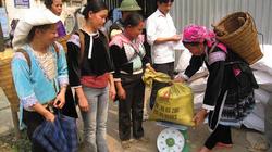 Lai Châu: Phân bổ 730 tấn gạo cứu đói giáp hạt