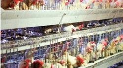 17 doanh nghiệp Pháp tham gia triển lãm chăn nuôi
