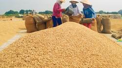 Hôm nay, Thủ tướng chủ trì họp về tiêu thụ lúa gạo