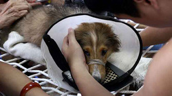 Bệnh viện cho… cún và miu