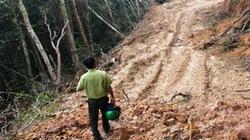 2 vụ phá rừng ở Khu bảo tồn thiên nhiên Ngọc Linh: Lòng vòng  truy trách nhiệm