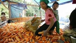 Phân tách đối tượng để cứu đói phù hợp