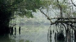 Ly kỳ cây si ngàn tuổi, rễ phủ mấy quả núi