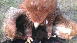 Thú chơi huấn luyện chim săn mồi và những nỗi sợ đáng suy nghĩ
