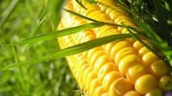 Lập hội đồng đánh giá thực vật biến đổi gene