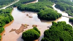 26,7 triệu euro để quản lý rừng bền vững