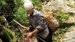 Mùa măng rừng xứ Lạng