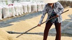 Phải đổi cách sản xuất kinh doanh lúa gạo