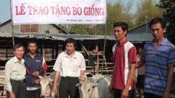 An Giang: Tặng bò sinh sản cho 69 hộ nghèo