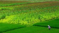 Thời tiết nông vụ miền Bắc từ 21 đến 31.3
