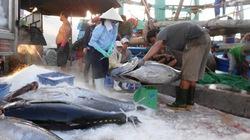 Bình Định: Ngư dân vững tâm và có thu nhập khá