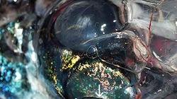Phát hiện loài cá 4 mắt kỳ lạ có tầm nhìn... 360 độ
