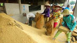 Long An giao thu mua 198.000 tấn lúa tạm trữ