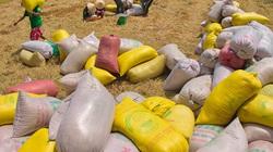 Kiểm tra thu mua tạm trữ thóc gạo