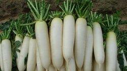Những lợi ích sức khỏe của củ cải