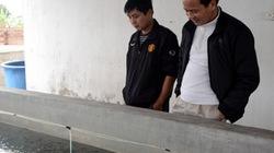 Quảng Ninh:  Người nuôi tôm dài cổ chờ điện