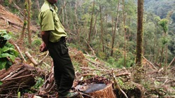 Vụ phá rừng ở Khu bảo tồn thiên nhiên Ngọc Linh: UBND tỉnh yêu cầu làm rõ trách nhiệm