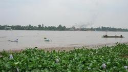 Quyến rũ mùa cá mờm, cá cơm trên sông Vàm Nao
