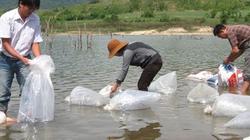 Quảng Ngãi: Thả cá chép giống xuống sông và hồ chứa