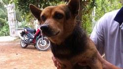 """Cảm động chuyện về con chó """"Gu"""" dị tật ở Vĩnh Long"""