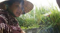 Nghệ sĩ Hoa Mỹ Hạnh tìm lại mộ con nhờ lòng hảo tâm của độc giả
