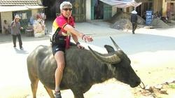 Ngộ nghĩnh khi Tây cưỡi trâu ở Việt Nam
