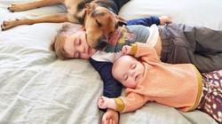 Ngắm bộ ảnh bé ngủ cùng thú cưng vô cùng đáng yêu