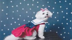 Tước quyền thừa kế 1,5 triệu USD của các con cho cún cưng