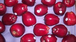 Vi khuẩn trong táo Mỹ nhập khẩu có thể gây nhiễm trùng máu