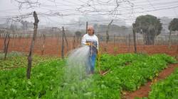 Lãi 500 triệu đồng/ha từ rau VietGAP
