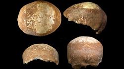 Hộp sọ cổ và tiết lộ sốc về quan hệ giữa người hiện đại với người tiền sử