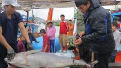 """Thêm 7 con cá ngừ Việt lên máy bay """"chu du"""" Nhật"""