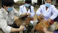 Tập trung triển khai phòng chống dịch cúm gia cầm