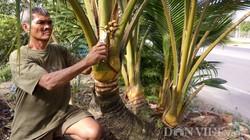 """LẠ: Cây dừa 8 thân, 8 đọt """"quái"""" nhất miền Tây"""