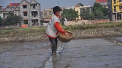 Sản xuất vụ đông xuân các tỉnh phía Bắc: Cảnh báo nhiều sâu, bệnh