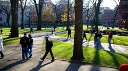 ĐH Harvard: Ban hành chỉ thị cấm thầy - trò yêu nhau