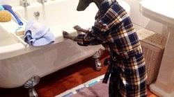 Chùm ảnh: Chú chó thích chụp ảnh như người