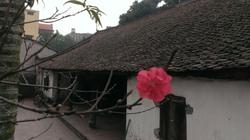 Tết ở ngôi làng cổ nhất Hà Nội có gì đặc biệt?
