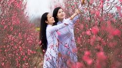 Nhạc Xuân hay nhất: Điệp Khúc Mùa Xuân
