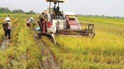 Huyện Phú Thiện – Gia Lai: Một mùa vàng trong tâm thế mới