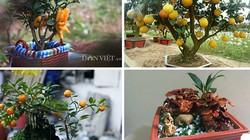 """""""Điểm mặt"""" những cây cảnh bonsai hút tiền dịp Tết Ất Mùi"""
