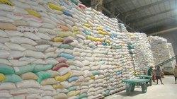 Xung quanh việc tạm trữ 1 triệu tấn quy gạo: Chưa có cách tốt hơn