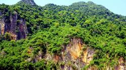 """Đi tìm loài cây """"thần"""" trên vách núi Pha Long"""