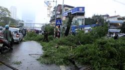 Hà Nội: Hàng loạt cây xanh bị đốn hạ trên đường Nguyễn Chí Thanh