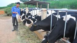 Sữa tươi bị chèn ép bởi sữa bột: Sự mập mờ gây hại